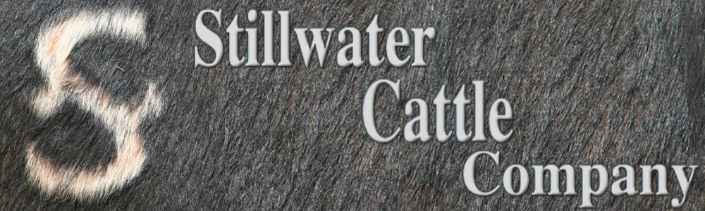 stillwater cattle company banner